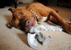 Make a dog tug toy out of a pair of old sweatpants ***Just made this with old colorful tshirts...the results look like something you would buy at the pet store! Love it! GREAT find :) P.S. My dog is LOVING this toy right now!!!***
