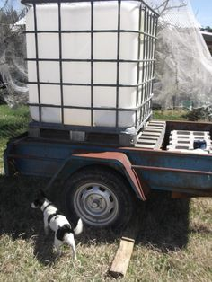 This tank holds 1,000 litres of water. Propped up on an old trailer (when it is empty), we then pump it full of water - and tow it around our property to water distant tree. Easier than carrying buckets. lol.