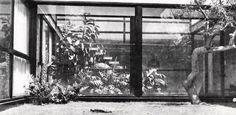 Jardín patio interior, Casa en Lomas, Monte Blanco 1265, Lomas de Chapultepec, México DF 1962   Arq. Jorge Creel de la Barra -  Interior garden space of a house in Lomas, Lomas de Chapultepec, Mexico City 1962