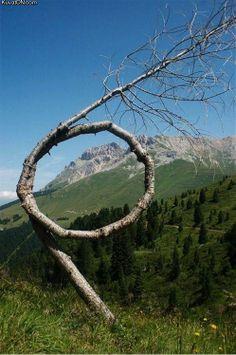 tree_art2.jpg
