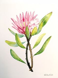 Excited to share this item from my shop: Tropical Protea Floral Watercolor Print Watercolor Pictures, Watercolor Cards, Watercolor Print, Watercolor Flowers, Watercolor Paintings, Fabric Painting, Australian Native Flowers, Australian Artists, Protea Art