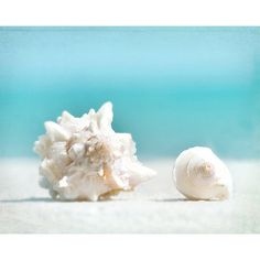 sea shell print, sea shells photography, ocean,turquoise peach conch seashells, beach cottage decor, pale, shore house, coastal living