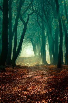natuurfoto die ik mooi vind