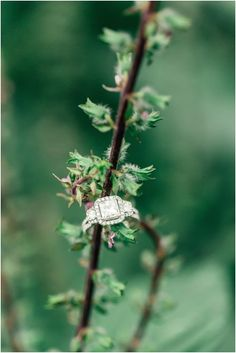 Square Engagement Ring | Hay Alexander Photography