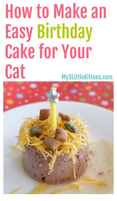Cat Care Tips This Easy Birthday Cake For Your Cat How To is perfect for your kitty! - Every cat has a birthday! My how to make an easy birthday cake for your cat is ridiculously fast and your cat will thank you! Cute Kittens, Little Kittens, Ragdoll Kittens, Nalu, Cake Recipe For Cats, Cat Recipes, Dog Food Recipes, Dessert Recipes, Birthday Cake For Cat