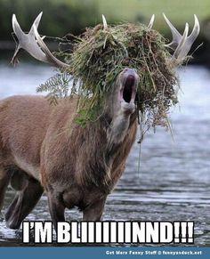 31 Best Funny Deer images in 2014 | Hunting humor, Funny