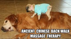 Funny Dog Massage!  Come to Fulcher's Therapeutic Massage in Imlay City, MI and Lapeer, MI for all of your massage needs!  Call (810) 724-0996 or (810) 664-8852 respectively for more information or visit our website xrosskore.com!