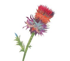 Musk Thistle, Painted Paper Collage Art Print
