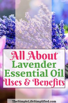 Lavender essential oil is one of the top oils for beginners and a must-have because of its versatility. Here are 10 of the key lavender essential oil uses and benefits, plus how to add it to your routine! Lavender Essential Oil Uses, Essential Oils For Skin, Young Living Essential Oils, Natural Health Remedies, Natural Cures, Herbal Remedies, Natural Skin, Best Oil For Skin, Lavender Benefits