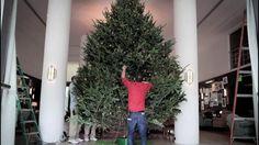 #SOHOHOUSE SBH: Christmas Tree. Video by sohohouse.