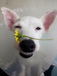 Conheça o cachorro sorridente da Tailândia: Euro