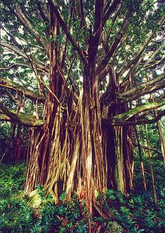 Trees Please – A Majestic Showcase of Tree Photography | Inspiration