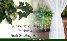 20 Non-Toxic Ways to Have a Fresh Smelling Home