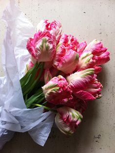 Parrot Tulips by dollydishcloth Pretty flowers, perfect garden. Cherry Blossom in snow . My Flower, Fresh Flowers, Spring Flowers, Beautiful Flowers, Bloom, Parrot Tulips, Pink Tulips, Tulips Flowers, Colorful Roses