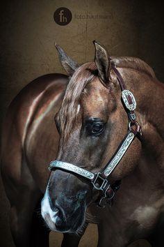 I Am A Ruf Boy : : AQHA Stallion