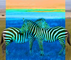 #zebra #psychedelic #gif Backgrounds Hd, Facebook Art, Second World, Trippy, Fiber Art, Psychedelic, Futuristic, Animation, Graphic Design