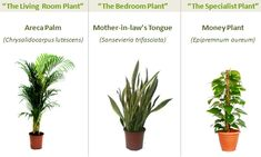 Three Plants That Give You Better Indoor Air   Lifehacker Australia
