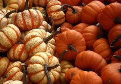 Pumpkins! There not really but r cute