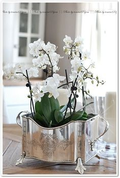 Explore these stunning and beautiful Phalaenopsis orchid arrangements. Find a wide range of exciting orchid arrangement ideas that includes potting your orchids in antiques, birdcages and much more! White Orchids, White Flowers, Beautiful Flowers, Silver Flowers, Beautiful Things, Vintage Silver, Antique Silver, Vibeke Design, Orchid Arrangements
