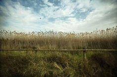 Naturaleza y Voluntariado Ambiental: REPORTAJE: El rey de los pájaros