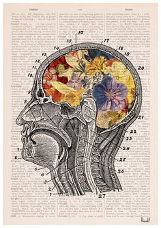 Flowery brain Poster anatomical art Wall art anatomy by PRRINT Brain Poster, Flower Anatomy, Brain Art, Brain Drawing, Human Anatomy Art, Poster Prints, Art Prints, Art Posters, Medical Art