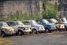 Fiat 500 Collection
