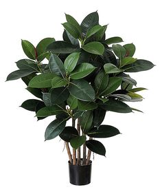 Perfect Plant For A Coffee Table In The Foyer, Looks Very Healthy.  Artificial Rubber