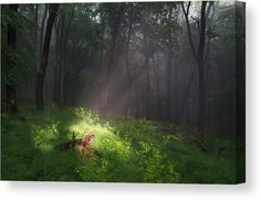 Ray - Canvas Print by Ren Kuljovska.  All canvas prints are professionally printed, assembled, and shipped within 3 - 4 business days and delivered ready-to-hang on your wall. Choose from multiple print sizes, border colors, and canvas materials. #ray #forestlight #afterrain #canvasprint #fineart #homedecor #homedecoridea #fineartprint #giftidea #wallart Forest Light, Picture Walls, Canvas Art, Canvas Prints, Nature Artists, Nature Artwork, Decor Ideas, Gift Ideas, Floral Pillows