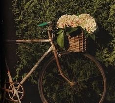 Have retro-style bike with basket that I may actually put in bedroom ... with flowers in basket. Love the look of these - hydrangeas, I think.
