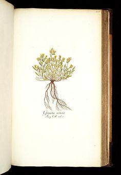 1781-93 - v.3 - Icones plantarum rariorum - edited by Nicolao Josepho Jacquin.