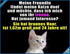 Die Katze bleibt natürlich! #Katze #Katzen #Katzenliebe #Humor #lustig #Sprüche #lustigeBilder #lachen #Haustier #niedlich