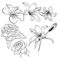 Sketch with flowers on VectorStock