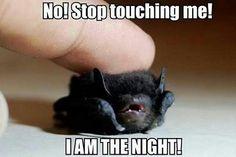 Tiny Batman