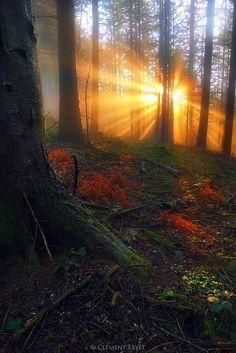bluepueblo:  Sun Ray Forest, France photo via eva