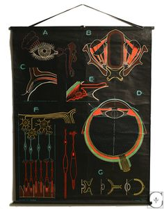 French Schoolroom Anatomist Human Eye Chart