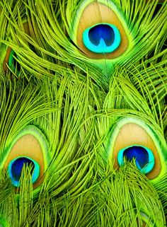 Peacock Feathers Green