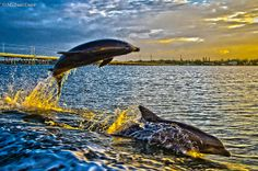 Morning Fun by Michael Cress Photography, via Flickr