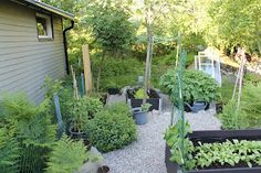 everyday delights: Vegetable garden before and after