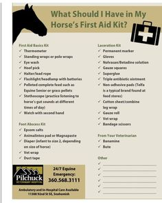 Things to have in a first aid kit for your horse