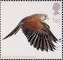 Birds of Prey 1st Stamp (2003) Kestrel with Wings fully extended downwards Uk Stamps, Royal Mail Postage, Postage Stamp Art, Kestrel, Vintage Stamps, Birds Of Prey, Mail Art, Stamp Collecting, Poster