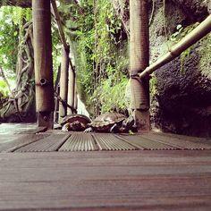 shot from down low turtle height via @Nic Hildebrandt {luzia pimpinella}