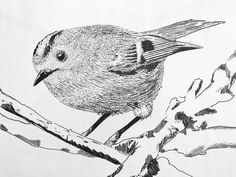 Goudhaan 2017 Owl, Fine Art, Bird, Illustration, Animals, Animaux, Owls, Birds, Illustrations