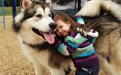beautiful husky and the little kid