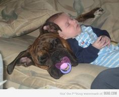 ~Cute Kids and Pets - Dogs Tips & Advice Boxer And Baby, Boxer Love, Baby Dogs, Doggies, 15 Dogs, Baby Puppies, Funny Dogs, Funny Animals, Cute Animals