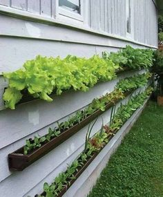 Dakgoot als tuin
