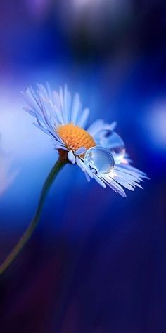 """"""" (via Pin by Angie Miller on macro photography 