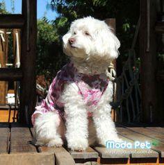 MEU PET NA MODA   Essa é a Jhuly, cheia de pose, no seu Vestido Veludo rosa   Só temos a agradecer por mais uma cliente satisfeita! #meupetnamoda #jhulycharmosa