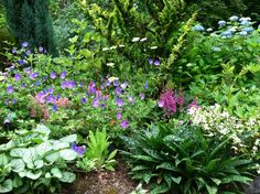 peonies landscaping ideas | ... photo gallery for Perennial Passions garden design and landscaping