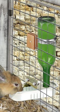 automatic drinking trough for rabbit at the hutch 10 Rabbit Hutch Plans, Rabbit Hutches, Meat Rabbits, Raising Rabbits, Bunny Cages, Rabbit Cages, Bunny Sheds, Rabbit Information, Rabbit Farm