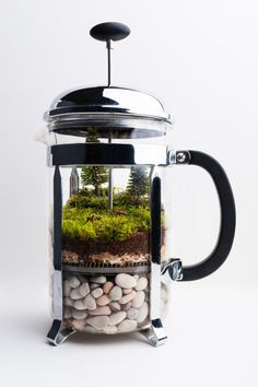 leveloneteam:  This time I've used an old coffee plunger to create some de(er)caffeinated coffee- mind the pun.Using an unusual or common household item as opposed to a jar can instantly make a terrarium more interesting. Terrarium and photography by Zik